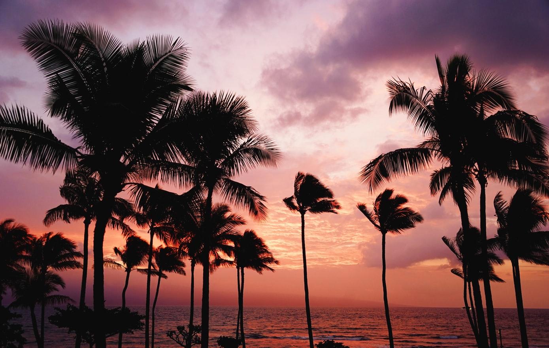 Palmy na tle zachodzącego słońca na wyspie Maui, Hawaje.