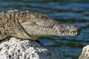 florida-everglades-national-park